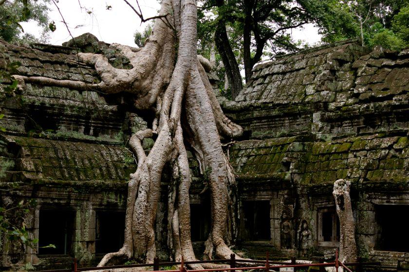 midnight blue elephant - perfect holiday - cambodia - vietnam - marocco - annika ziehen
