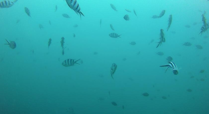 underwater love_new heaven diving_koh tao_thailand_midnight blue elephant_annika ziehen