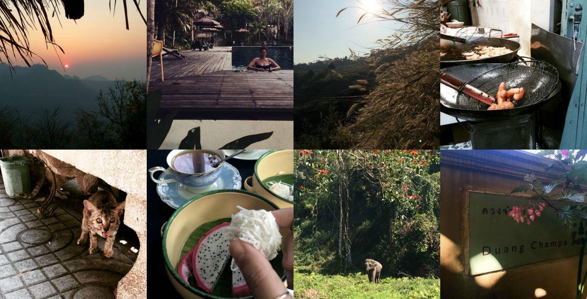 midnight blue elephant_thailand_chiang mai_bangkok_koh tao_travel_annika ziehen