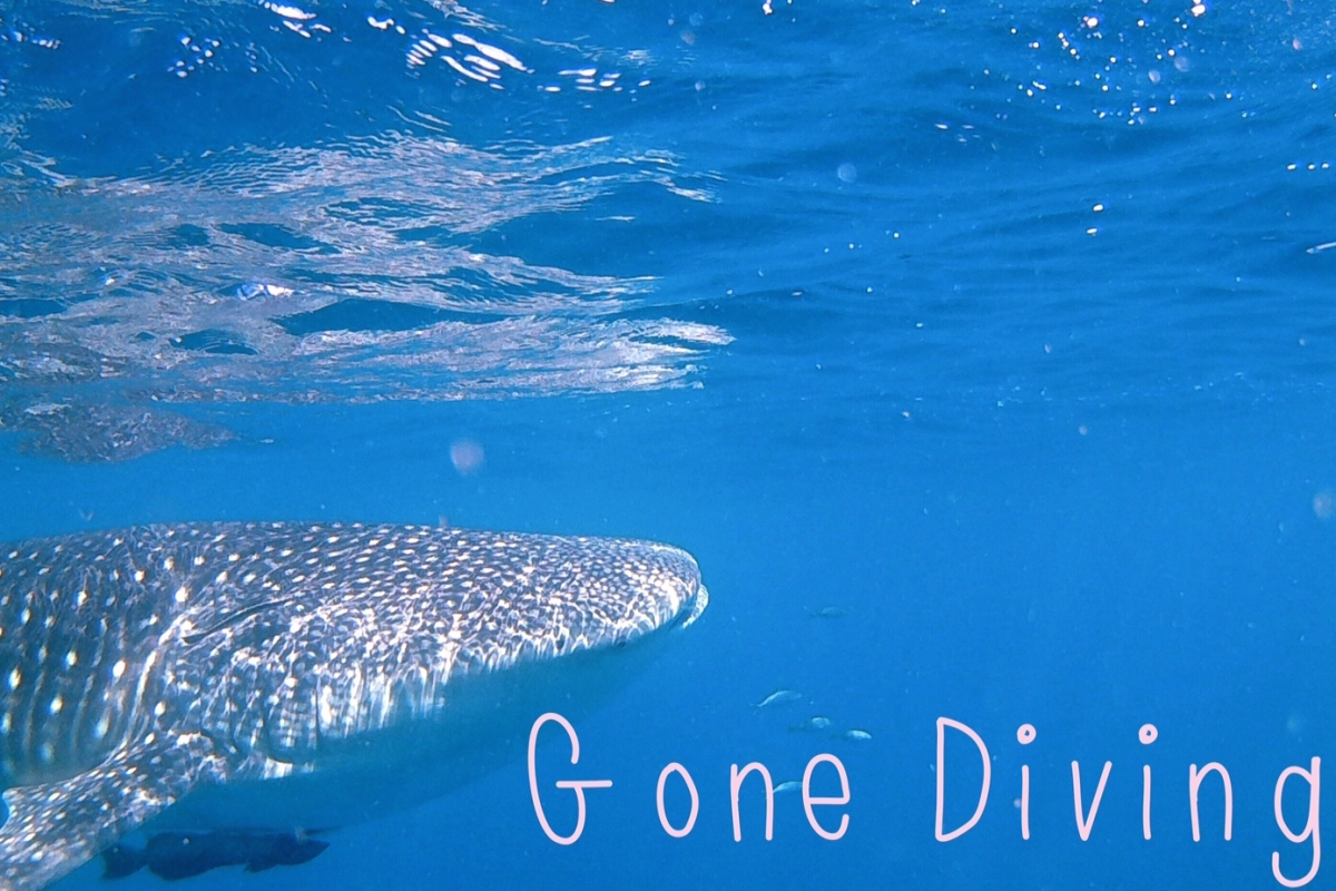 diving_whale shark_midnight blue elephant_annika Ziehen